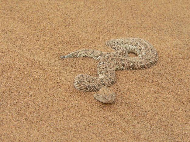 Schlange-Versuchung