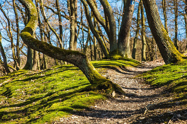 Weg-Wald